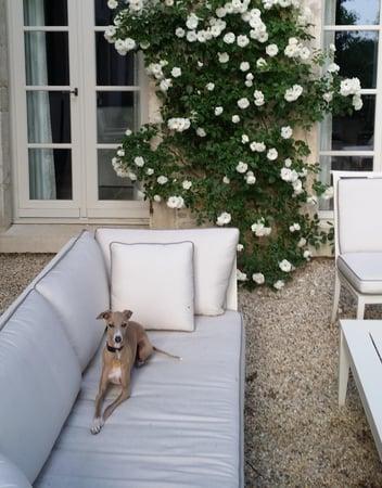 Core Home dog-740760-edited