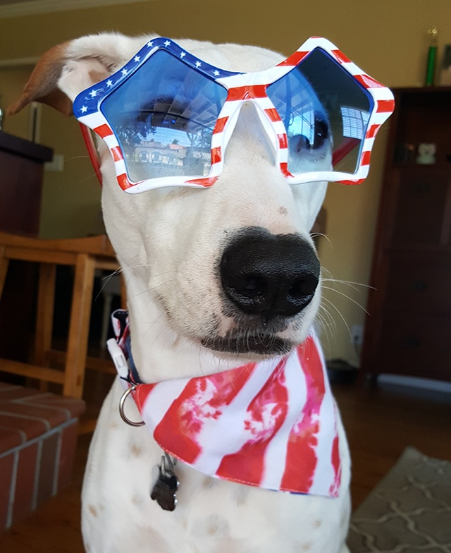 all-american-dog-cropped